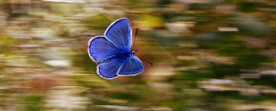 Edito_Dimanche_Pixabay_butterfly-2837589_1920