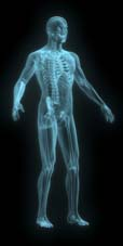 X-ray of man blue front side view